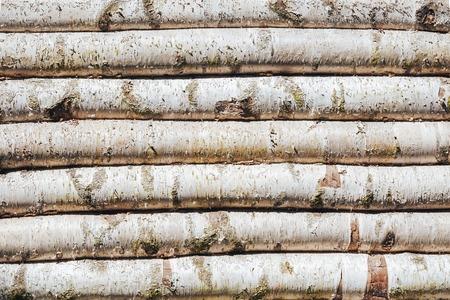 Birch log hut wood background