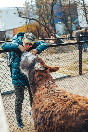 Shot of beautiful girl feeding donkey at zoo Imagens