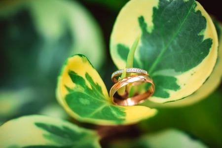 Twee gouden trouwringen op bloemen, trouwringen achtergrond concept
