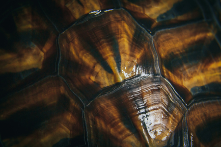 beautiful rare: the texture of the carapace of the red-eared terrapins close up
