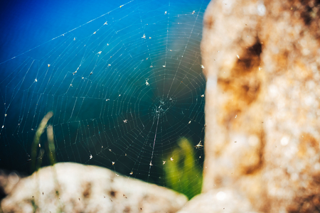 The spider web (cobweb) closeup background. The web over blue water between the stones