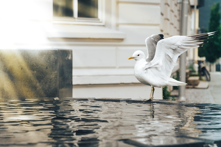 Fountain and herring gull in the water in the city in Norway