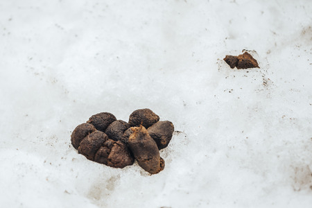 Big pile of fresh dog poop sitting in the snow during the winter