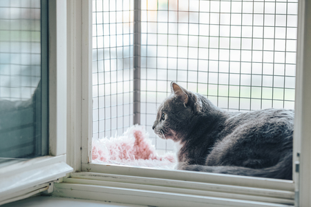 Safety Window gray cat. A special enclosure for cat safety is installed on the window Archivio Fotografico - 100734227