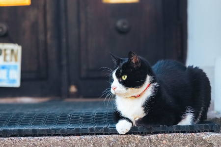 Black and white cat with green eyes watches things from the porch Foto de archivo