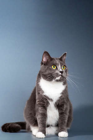 Gray kitten isolated on a gray background.