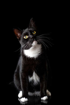 Black young cat, photographed in the Studio on a black background. Closeup portrait. Different emotions