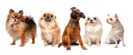 group of different breed dogs sitting in a row