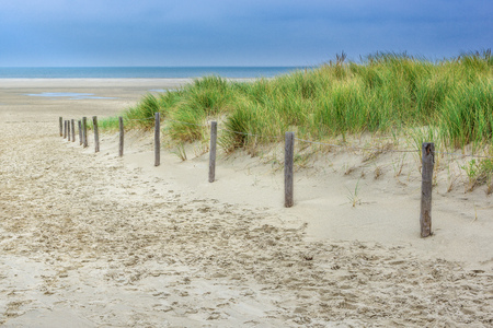 Dunes in the Netherlands. Beach walk along the dunes on a windy autumn day on the island of Texel in North Holland. Фото со стока
