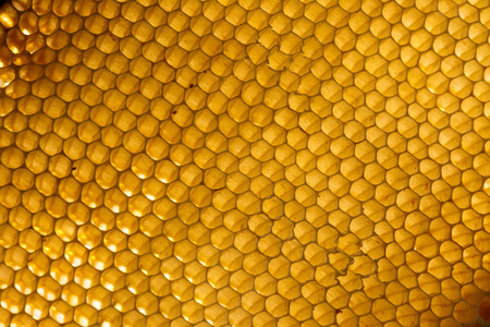 Background. Macro shot of a honeycomb in soft evening light. Imagens
