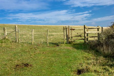 울타리가있는 유명한 흰색 절벽 근처의 목자