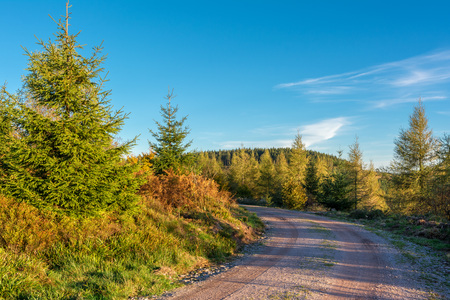 Autumn landscape - Black Forest. View over the autumnal Black forest with road late afternoon.