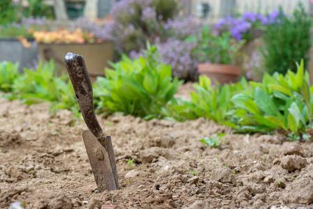 Gartenarbeit. Eine Schaufel im Garten nach der Arbeit. Standard-Bild