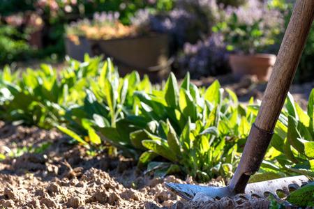 Gardening. A rake in the garden after work
