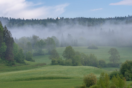 French landscape - Jura. View over a flower meadow and a forest in the background with a light fog.
