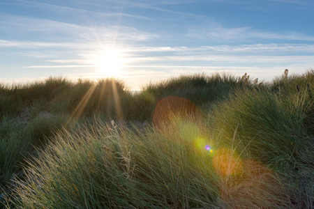 French landscape - Bretagne. Sunset with dunes and grass.