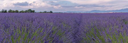 French landscape - Valensole. view over the fields of lavender in the Provence (France). Stok Fotoğraf - 127615300
