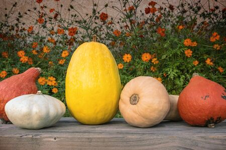 Holidays and season - autumn. Different beautiful colored pumpkins with a flowered background.