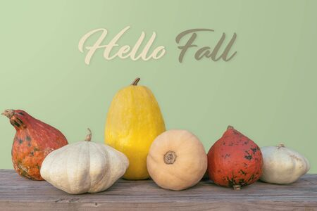Holidays and season - autumn. Different beautiful colored pumpkins with a flowered background. Text: Hello Fall
