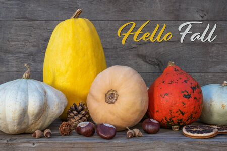 Holidays and season - autumn. Different beautiful colored pumpkins with wooden background. Text: Hello Fall Zdjęcie Seryjne