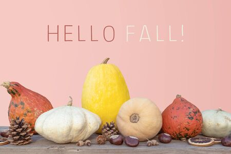 Holidays and season - autumn. Different beautiful colored pumpkins with pink background. Text: Hello Fall