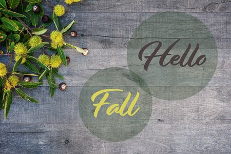 Holidays and season - autumn. Chestnuts and leaves on wooden background. Text: Hello Fall!