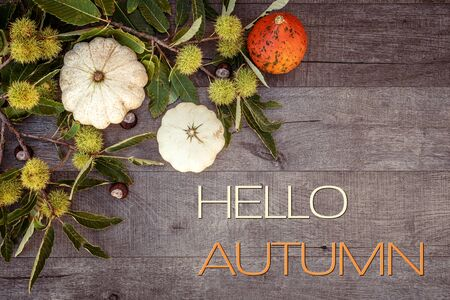 Holidays and season - autumn. Different beautiful colored pumpkins with dark background. Text: Hello Autumn