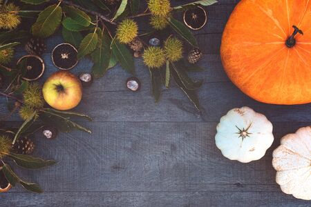 Holidays and season - autumn. Different beautiful colored pumpkins with dark background. Copy Space. Zdjęcie Seryjne