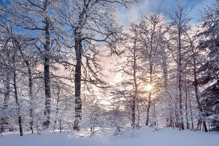 French winter landscapes. Panoramic view of mountain with snow covered trees. Vercors Regional Natural Park.