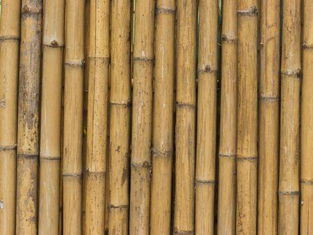 Bamboo Pattern Stock Photo - 9393428
