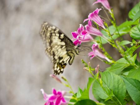 Flying butterfly on flowers photo