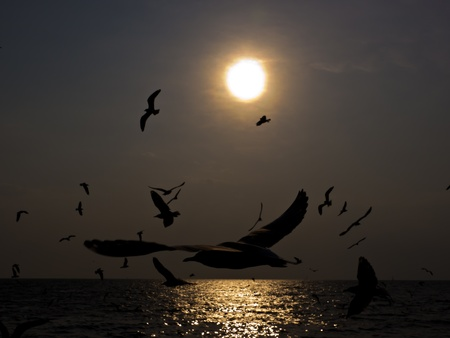 Flock of Seagulls at sunset over the sea photo