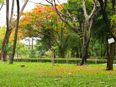Environment in Public park