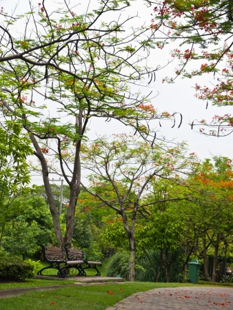 public park: Medio Ambiente en el parque p�blico