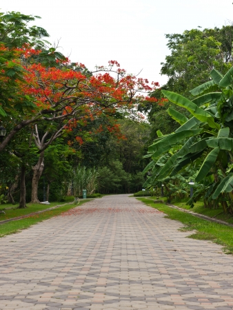 Pathway in public park in Bangkok Stock Photo