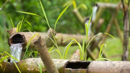 bambu: Tubería de agua natural Foto de archivo