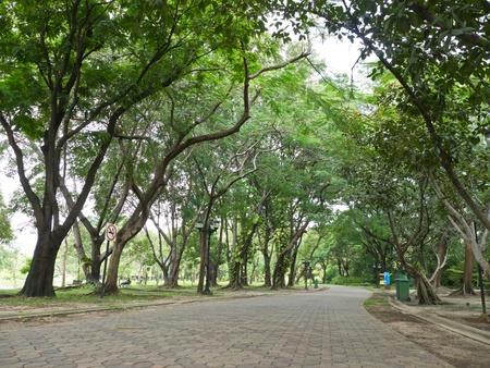 public park: �rbol en el parque p�blico