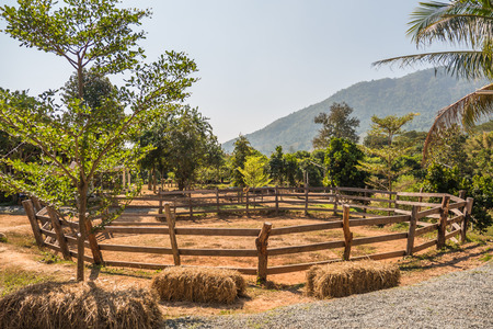 horse stable: View of horse stable in countryside of Thailand