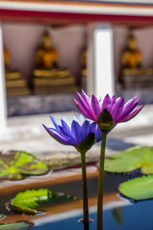 buddhist temple: Waterlily in Buddhist temple