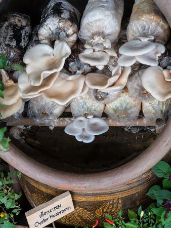 cultivate: Cultivate mushrooms Stock Photo