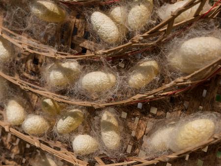 silkworm: Silkworm Cocoons