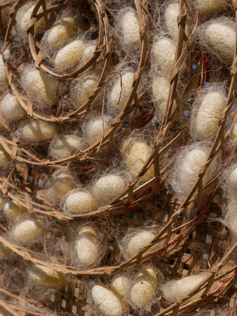 cocoons: Silkworm Cocoons