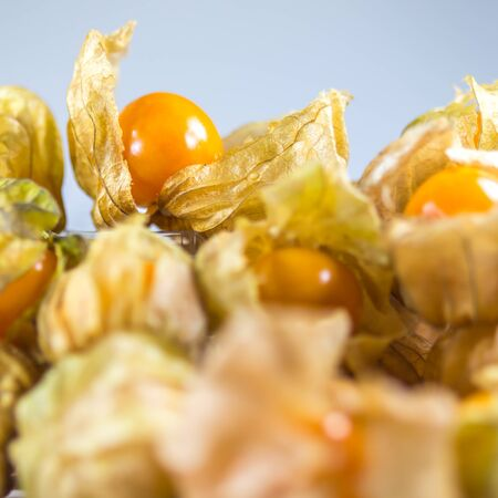 Gooseberry or Physalis fruit, winter cherry Stock Photo