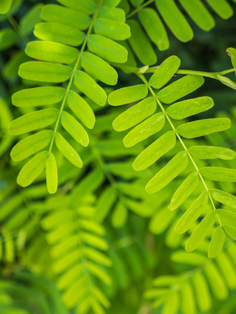 Green leaves, natural background