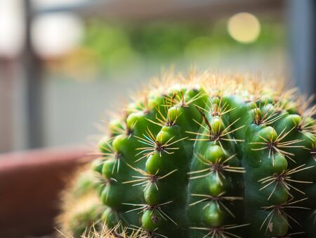 Small green cactus with light bokeh in background Stock Photo
