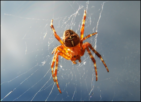 A tiny orange spider and its web on a window