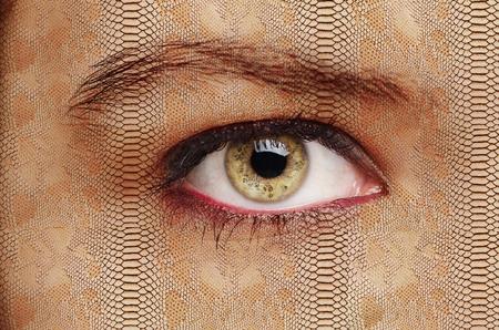 intermediate: intermediate form of creatures eye