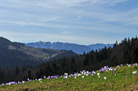 assert: Flowers in the mountains amouncing spring is near