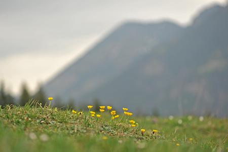 Blumen im Frühjahr Berge amouncing ist in der Nähe von