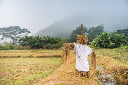 Scarecrow in paddy field with forest and mountain.